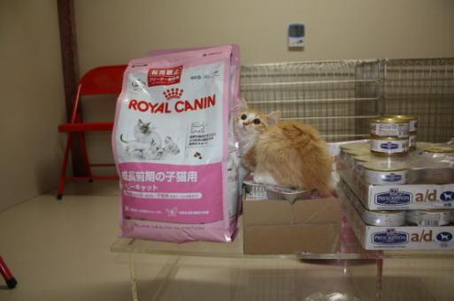 キャッテリーKAZU DOZU(カズ ドズ)子猫フード
